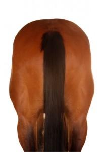 A Horse's Rear