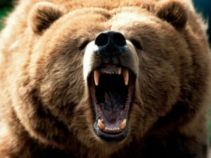 Image of a Fierce Grizzly Bear